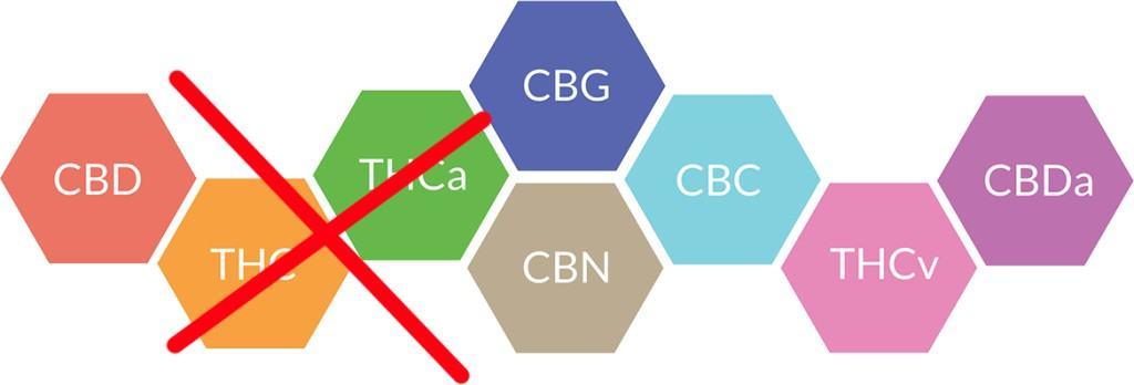 Broad Spectrum layout